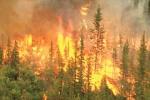 Cháy rừng tại Ấn Độ, rơi trực thăng tại New York