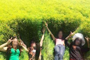 Cánh đồng hoa thì là 'hot nhất' Ninh Thuận dập tơi tả sau 4 ngày tham quan, chủ vườn có thể sẽ không mở cửa trở lại