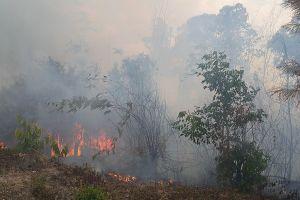 Cháy 40ha rừng thông phòng hộ ở Gia Lai