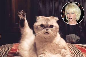 'Linh vật chợ Hải Phòng' có hot cỡ nào cũng bị mèo cưng của Taylor Swift ăn đứt