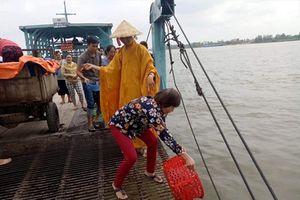 Thả 500kg cá trê phi về sông Tiền