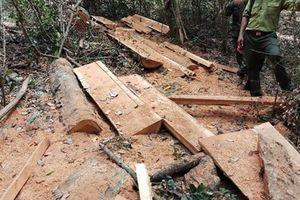 16 đối tượng phá rừng ở vườn Quốc gia Yok Đôn như thế nào?