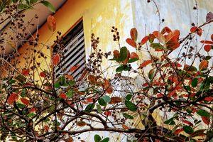 Ngắm Hà Nội đẹp xao xuyến giữa những ngày 'phố không mùa'