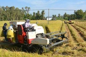 Tập trung thu hoạch lúa và phòng trừ sâu, bệnh