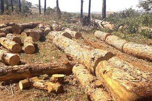 Chủ tịch xã nhận hối lộ, tiếp tay phá rừng bị bắt tạm giam