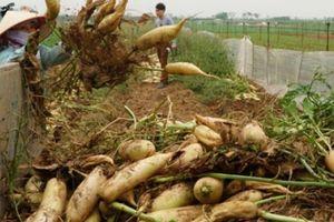 Phân tích thị trường và tiêu thụ nông sản ở ta còn rất yếu