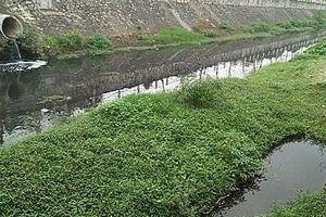 'Rừng sinh thái' giữa lòng kênh Bắc?