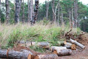 Đắk Nông: Chủ tịch xã nhận 350 triệu cho các đối tượng phá rừng