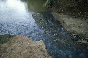 Đắk Lắk: Yêu cầu Cty Thành Vũ khắc phục vụ xả thải gây ô nhiễm môi trường