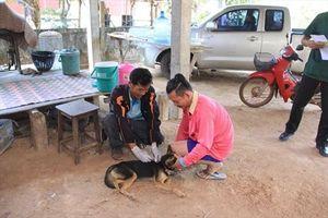 Thái Lan tăng cường kiểm soát bệnh dại