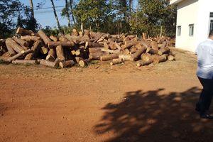 Bắt thêm 1 đối tượng trong vụ Chủ tịch xã nhận tiền 'giúp' phá rừng ở Đắk Nông