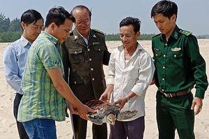 Thả cá thể rùa biển quý hiếm nặng 8kg về biển