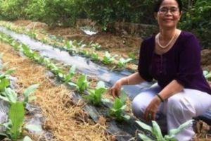 Bà giúp việc 52 tuổi khởi nghiệp sản xuất trà Bồ Công Anh