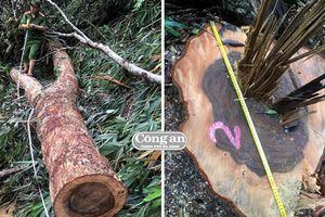 Triệt xóa nhóm khai thác gỗ quy mô lớn