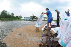 Tiền Giang phát triển nuôi thủy sản nước mặn phục vụ xuất khẩu