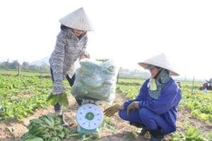 Bất cập trong liên kết sản xuất nông nghiệp ở Hà Tĩnh