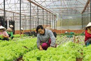 Trồng rau sạch công nghệ cao: Nông dân 4.0 đều tay thu hàng trăm tỉ/năm
