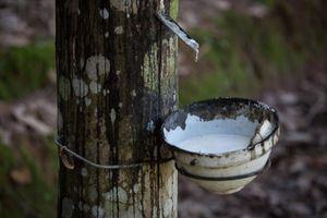 Thái Lan nỗ lực giảm nguồn cung cao su