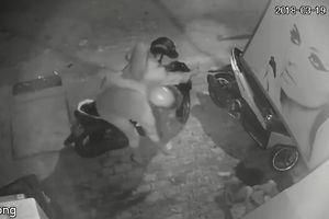 Clip: Bất ngờ bị cướp chó, thanh niên cố gắng giữ lại bị kéo lê hàng chục mét trên đường