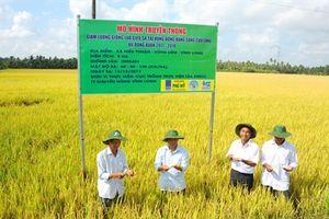 Giảm giống gieo sạ tăng hiệu quả kinh tế