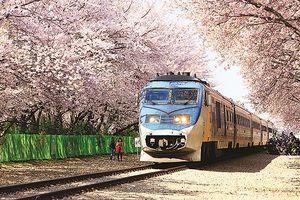 Vẻ đẹp xứ Hàn vào xuân