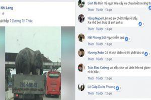 Xe tải chở voi băng băng giữa quốc lộ, người dân hoảng hồn