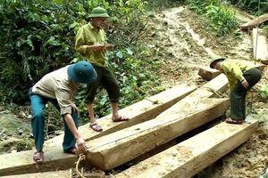 Làm rõ trách nhiệm vụ phá rừng tại Quảng Bình