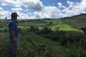 Nhận đất rừng sai quy định còn cho người phá rừng