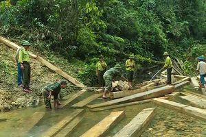 Quảng Bình: Xử lý nghiêm vụ phá rừng ở xã Thanh Hóa