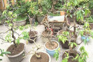 Bắt kẻ trộm hàng loạt cây cảnh quý ở Huế