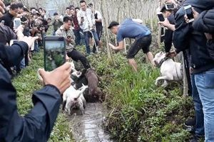 Công an thông tin vụ 'đấu thú man rợ' giữa lòng Hà Nội