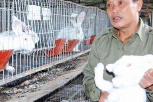 Lãi hàng trăm triệu mỗi năm nhờ nuôi thỏ