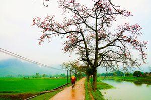 Hoa gạo đẹp mê hồn trong ảnh của 'Trùm săn hoa gạo' Trần Xuân Thiều