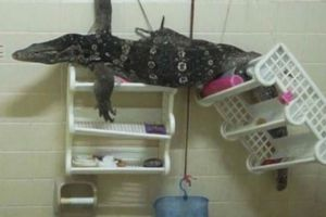 Phát hiện sinh vật gớm ghiếc khổng lồ trong phòng tắm