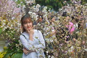 Lễ hội hoa anh đào bên hồ Gươm đông nghẹt du khách