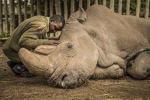 Rồi đây con cái chúng ta sẽ hỏi 'Tê giác là gì hả mẹ?'