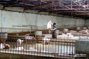Người chăn nuôi lao đao vì giá thức ăn tăng cao