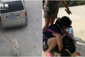 Bị kéo lê đến chết sau giây phút cố cứu chó cưng từ tay cẩu tặc