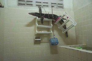 Kỳ đà khủng bỗng dưng chui vào buồng tắm