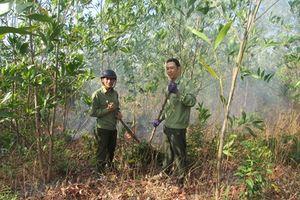 Khó khăn thu hồi đất rừng bị lấn chiếm