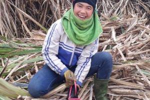 Nông dân trồng mía ở Sơn La yên tâm nhờ có 'bảo hộ'
