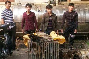 Quảng Trị: Bắt giữ nhóm thanh niên bắt trộm chó