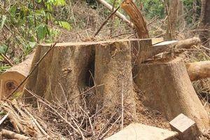Quảng Nam đóng cửa rừng hơn 10 năm: Giật mình từ những con số