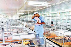 Phát triển ngành chăn nuôi: Cấp bách tạo cú hích căn cơ