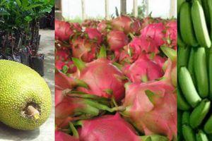 Những nông sản tăng giá đột biến vì Trung Quốc thu gom