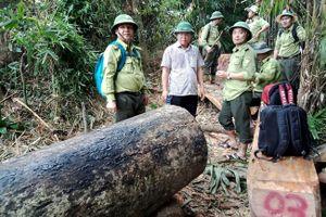 Quảng Nam: Rừng phòng hộ sông Kôn bị tàn phá không thương tiếc