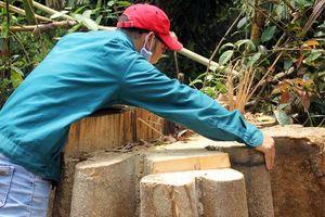 Quảng Nam: Liên tiếp phát hiện các vụ phá rừng