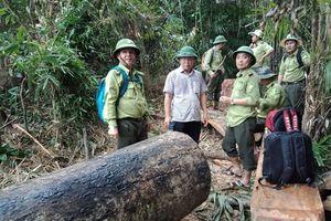Lãnh đạo tỉnh Quảng Nam: Rừng bị phá như máu mình đổ