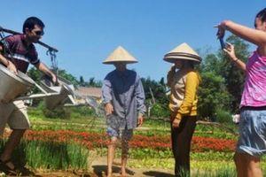 Những kinh nghiệm cực quý để phát triển du lịch nông nghiệp
