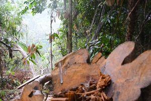 Tan nát rừng xanh: Phó Chủ tịch tỉnh công bố email kêu gọi tố cáo